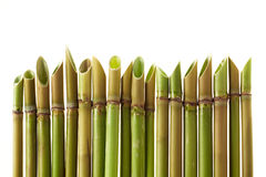Acute cane Stock Photography