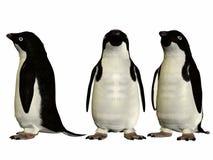 Adélie Penguin Stock Photography