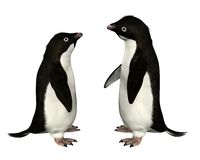 Adélie Penguins Stock Photos