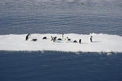 Adélie pingwiny na blokach lód w Weddell morzu Obraz Royalty Free