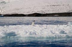Tempanos in the Antarctic peninsula. stock images