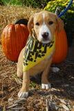 Adópteme perrito Foto de archivo libre de regalías