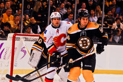 Adam McQuaid Boston Bruins Royalty Free Stock Image