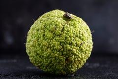 Adam-` s Apfel auf einem schwarzen Hintergrund Stockbild