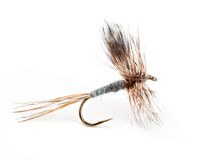 The Adams Dry Fly. The Adams, world's most popular dry fly for trout Stock Images