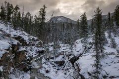 Adams-Fälle, Rocky Mountain National Park Lizenzfreie Stockfotografie