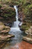 Adams nedgångar i Ricketts Glen State Park Pennsylvania arkivfoto
