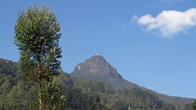 Adams Peak with fluffy clouds Stock Image
