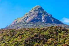 Adams Piek, Sri Lanka stock foto