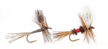The Adams and Royal Wulff Dry Flies Royalty Free Stock Image