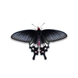 Adamson& x27; Schmetterling s Rose Lizenzfreie Stockfotografie