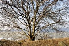 Adandone wybrzeża drzewo Obrazy Royalty Free