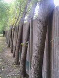 a adaptação das árvores é tão incrível Fotografia de Stock