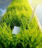 Adaptateur de WI fi de lte d'USB dans l'herbe verte Image libre de droits