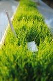 Adapter för USB Wi Fi i grönt gräs Arkivbilder