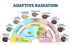 Free Adaptive Radiation Vector Illustration. Labeled Birds Diet Evolution Diagram Stock Image - 180283651