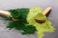 Adaptogen background. Ground powdered chlorella and barley top view. Superfood concept Stock Photos