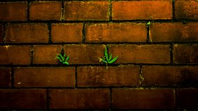Adaptogen Fern Green Brickwall stock foto's