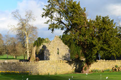 Adare Friary Ruins in Ireland. Ruins of the Adare friary in County Limerick Ireland Stock Image