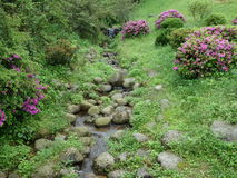 Add a beautiful thing to a contrasting beautiful thing. Not famous small streams, green grass, Boulder, clear creek, because the ornament of flowers appear next Stock Photo