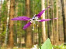 Adder's-tongue flower Stock Photos