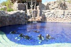 Addestramento degli operatori subacquei Fotografie Stock Libere da Diritti
