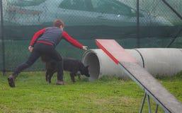 Addestramento del cane Immagine Stock
