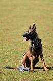 Addestramento del cane Fotografia Stock Libera da Diritti