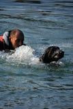 Addestramento del cane in acqua   Immagine Stock