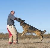 Addestramento del cane poliziotto immagini stock libere da diritti