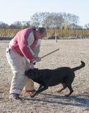 Addestramento del cane poliziotto immagine stock libera da diritti