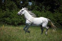 Addestramento del cavallo Immagini Stock