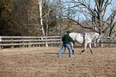 Addestramento del cavallo alla lunga fila fotografie stock