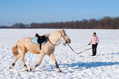 Addestramento del cavallo in inverno Fotografia Stock