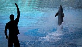 Addestramento del delfino Fotografie Stock Libere da Diritti