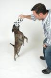 Addestramento dell'animale domestico fotografia stock