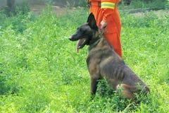 Addestramento di cani Fotografia Stock