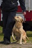 Addestramento di cani Immagine Stock