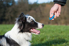 Addestramento di cani Fotografie Stock Libere da Diritti