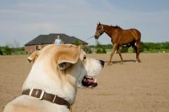 Addestramento di sorveglianza del cavallo del cane fotografia stock libera da diritti
