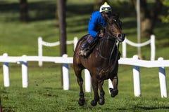 Addestramento di Sprint della puleggia tenditrice del cavallo di corsa Fotografia Stock Libera da Diritti