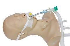 Addestramento medico di simulazione dell'intubazione tracheale v artificiale Fotografia Stock Libera da Diritti