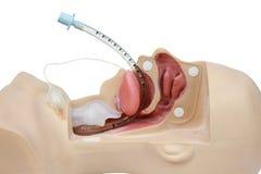 Addestramento medico di simulazione dell'intubazione tracheale v artificiale Fotografie Stock Libere da Diritti