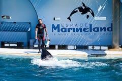 Addestratore della balena immagini stock libere da diritti