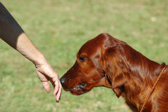 Addestratore di cane Immagini Stock