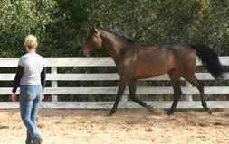 Addestratore di cavallo 2 Fotografie Stock Libere da Diritti