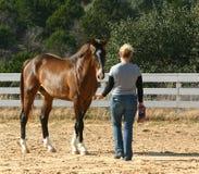 Addestratore di cavallo Immagini Stock