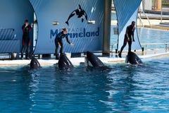 Addestratori della balena fotografia stock libera da diritti