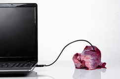 Addicted to a computer. Real heart connected to laptop via usb cable, concept Royalty Free Stock Photo