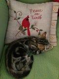 Addie猫-地球上的和平 免版税库存图片